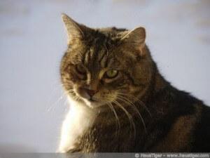 Blogcats: Sammy