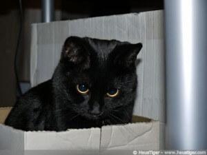 Blogcats: Tiffy