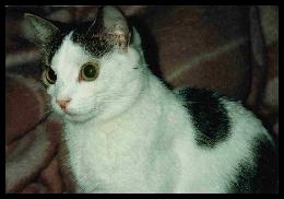 Murmel († Januar 1996)