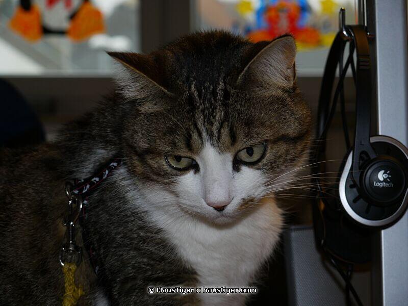 charlie_2009-10-29lumix031