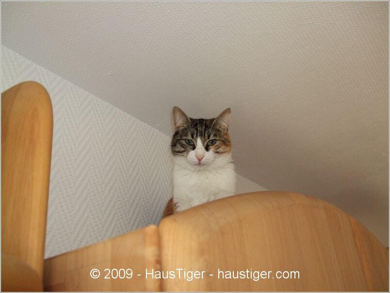 daisy_2009-04-12fp011