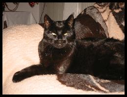 Semmy († Dezember 2004)